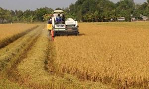 Để ngành lúa gạo vượt khó: Thay đổi tư duy sản xuất