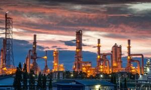 Giá dầu tăng trở lại sau những tín hiệu tích cực từ Tổng thống Donald Trump