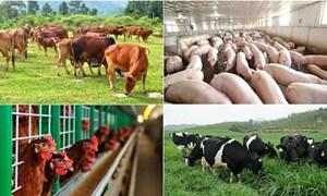 Từ ngày 17/5/2021, giảm 50% mức thu phí trong chăn nuôi