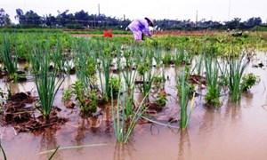 Phát triển nông nghiệp Việt Nam thích ứng với biến đổi khí hậu