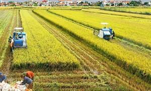 Miễn thuế sử dụng đất nông nghiệp tạo nguồn lực hỗ trợ phát triển sản xuất