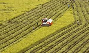 Cho vay thúc đẩy sản xuất, tiêu thụ lúa gạo khu vực Đồng bằng sông Cửu Long