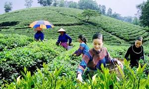Chính sách hỗ trợ đồng bào dân tộc thiểu số phát triển kinh tế ở tỉnh Sơn La
