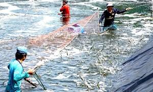 Xuất khẩu thủy sản tăng trưởng ấn tượng trên nhiều thị trường