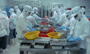 Xuất khẩu tôm Việt Nam: Bất ngờ thị trường Australia, dẫn đầu vào Nhật