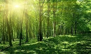 Bổ sung gần 427 tỷ đồng ngân sách trung ương cho bảo vệ và phát triển rừng năm 2021