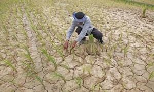 Hỗ trợ tới 90% phí bảo hiểm nông nghiệp cho hộ nghèo, cận nghèo