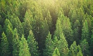 Phục hồi rừng, khí thải carbon chỉ còn 2/3
