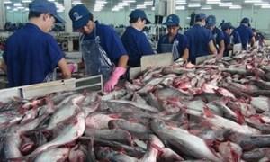 Mỹ tăng mạnh thuế chống bán phá giá, xuất khẩu cá tra giảm mạnh