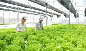 Đầu tư phát triển nông nghiệp thông minh 4.0: Kinh nghiệm từ Lâm Đồng