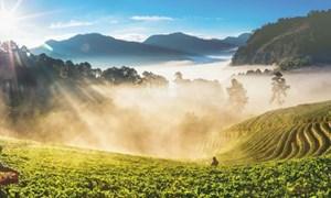 Bài học từ nông nghiệp của người Thái
