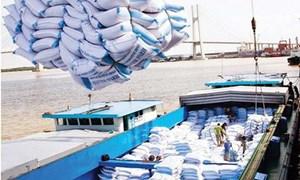 Xuất khẩu gạo kỳ vọng bứt phá vào cuối năm