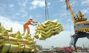 Thêm 42 doanh nghiệp được cấp phép xuất khẩu gạo