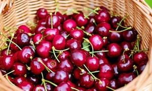 Cherry Trung Quốc nhập nhằng cherry Úc
