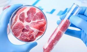 Thịt nhân tạo: Tiềm năng song còn nhiều thách thức
