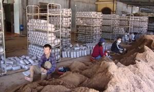 Bình Phước phát huy tiềm năng kinh tế trang trại