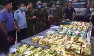 Bắt giữ hơn 237kg ma túy