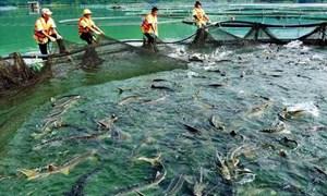 Đề xuất bãi bỏ một số loại phí, lệ phí lĩnh vực quản lý vật tư nuôi trồng thủy sản