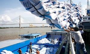 Thị trường gạo xuất khẩu sẽ nhộn nhịp vào dịp cuối năm