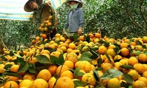 Đẩy mạnh đưa nông sản lên các sàn thương mại điện tử