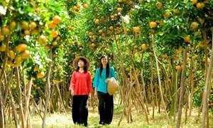 Phát triển mô hình du lịch gắn với sản xuất nông nghiệp