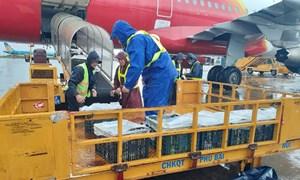 Hàng viện trợ khẩn cấp khắc phục hậu quả thiên tai không chịu thuế