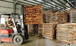 Xuất khẩu gỗ: Cơ hội và thách thức đan xen