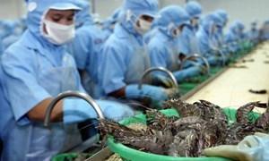 Vì sao EU giảm nhập tôm Việt?