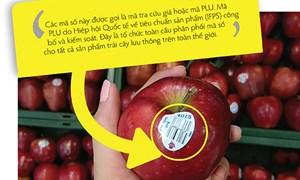 Đọc hiểu hàng nhập khẩu qua tem dán