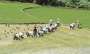 Bảo hiểm nông nghiệp: Khó đủ đường