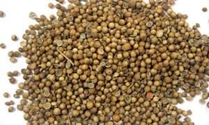 Giá hạt mùi đắt gấp 3 vì bệnh sởi
