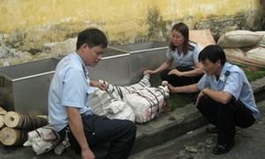Thủ tướng tặng Bằng khen cho cán bộ Hải quan đã có thành tích bắt ngà voi, tê tê