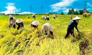 Tạo bứt phá cho nông nghiệp trước thách thức của biến đổi khí hậu và gia tăng dân số