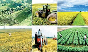 Ngân hàng tập trung vốn cho nông nghiệp