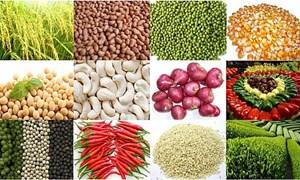 Đầu ra nào cho ngành trồng trọt?