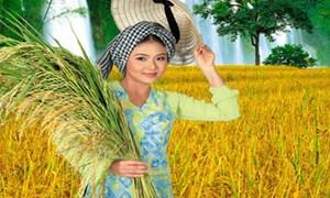 Hơn 300 nghìn hộ dân tham gia bảo hiểm nông nghiệp sau 3 năm thí điểm
