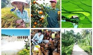 Tình hình sản xuất nông nghiệp nửa đầu năm 2014