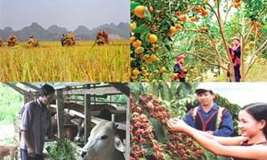 Giải bài toán phát triển nông nghiệp bền vững tại Việt Nam