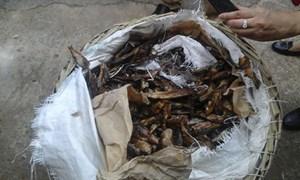 Phát hiện và bắt giữ 1.471 kg vẩy tê tê nhập lậu đội lốt cá trích