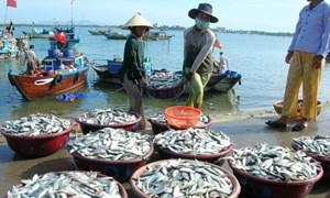 Để chính sách phát triển thủy sản nhanh chóng đi vào cuộc sống