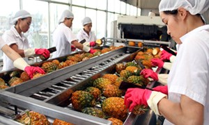 Xuất khẩu nông sản: Giảm cả lượng và giá trị