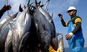 Giải pháp phát triển kinh tế biển bền vững