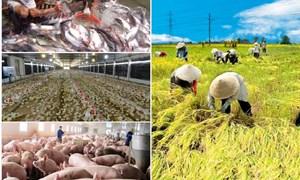 Hành trang cho nông nghiệp trong bối cảnh hội nhập