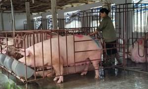 Phát triển bền vững kinh tế trang trại ở Tam Điệp, Ninh Bình