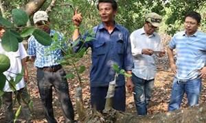 Bình Phước: Phấn đấu tăng trưởng kinh tế nông nghiệp tăng 6,09%
