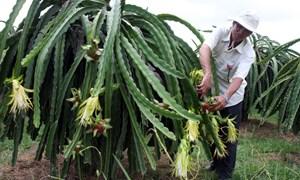 Bệ đỡ cho nông nghiệp hội nhập
