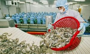 Tôm xuất khẩu của Việt Nam không bơm Pectin