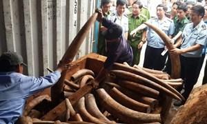 Biểu dương Hải quan TP. Hồ Chí Minh bắt giữ hơn 2 tấn ngà voi