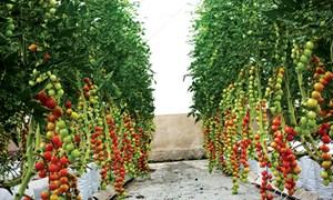 Bài toán cần giải cho nông nghiệp công nghệ cao