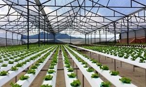 Phát triển nông nghiệp theo xu hướng công nghệ cao